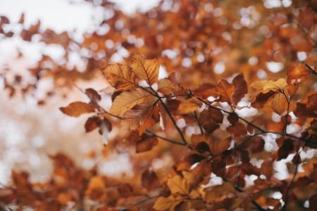 Blog idiomy dbanie o kondycję i zdrowie jesienią